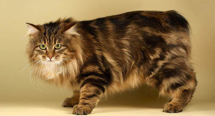 Top  Cat Breeds