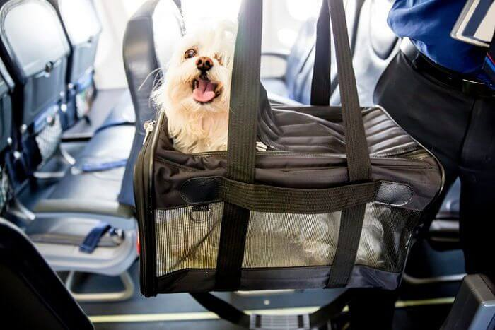 Top 10 Most Pet Friendly Airlines Page 5 Of 10 Petfluf